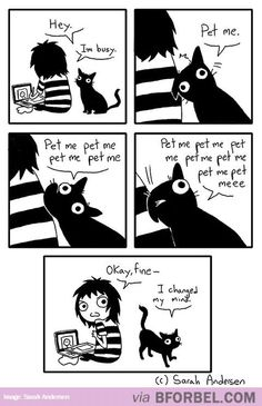 That's Cats For You…