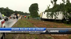 Shark Killed in I-95 Crash | Law Wire News | July 2015