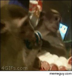 Monkey in the mirror #funny #monkey #mirror #animated #gif #humor #comedy #lol