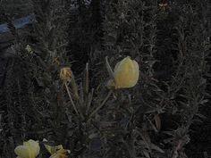 Azan flower was opening itS leaves in azan time