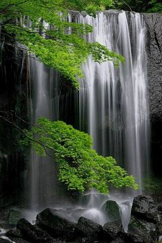 splash of color photography #green foliage / trees / waterfalls
