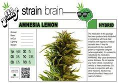 "Friends click LIKE to PUFF & rePIN to PASS ~* ""Amnesia Lemon"" ~* CBD :: 0.9% ~* CBC :: 0% ~* THC :: 12.35% ~* Effective in treating anxiety/chronic pain/insomnia/muscle spasms/tremors while also providing an energetic ""mind-high"", that may also stimulate the appetite, and relieve depression, migraines and nausea ~* Tell us, how do you rate Amnesia Lemon, would you PUFF or PASS?  ~* Learn More 