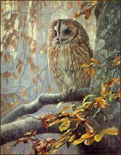 Robert Bateman Tawny Owl In Beech 1988 Original Lithograph A Art And Illustration, Illustrations, Owl Art, Bird Art, Owl Pictures, Beautiful Owl, Tier Fotos, Wildlife Art, Art Google