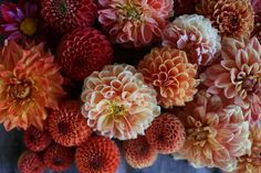 Dahlias--lots and lots of dahlias from Floret Flower Farm.
