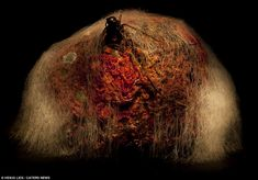 OcéanoMar - Art Site : Heikki Leis, extraordinary series of other-worldly landscapes using nothing more than rotten fruit and veg.