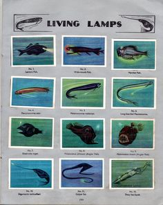 NESTLE': Wonders of the World (1932 - Living Lamps)