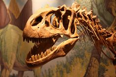 Allosaurus at the Utah Field House of Natural History State Park Museum   Flickr - Photo Sharing!