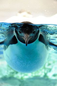 Interesting angle on this photo of a penguin.