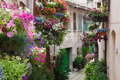 Potted Plants outside Houses, Spello, Italy