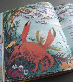 'A First Book Of Nature' by Nicola Davies, illustrated throughout by Mark Hearld via @St. Jude's