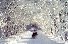 Upper Peninsula snowmobile trail.