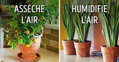 Beaucoup de gens ne sont pas conscients du pouvoir incroyable des plantes d'intérieur : elles ont une influence sur le microclimat de nos maisons. Les plantes créent une atmosphère plus saine, stabilisent la quantité d'humidité contenue dans l'air et diffusent de l'oxygène, ce qui permet aux enfants et aux personnes qui ont des allergies de mieux respirer. L'équipe de Sympa-sympa.com a préparé une liste des meilleures plantes à installer chez soi.