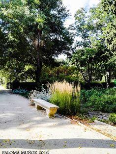 El Botánico, paseo. Finales de agosto.