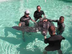 Rescue... Leatherback!