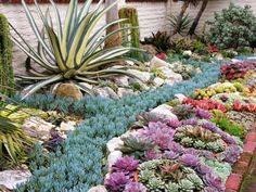 Succulent garden at Sherman Gardens in California.  love the blue river running by all the different colors..