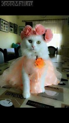A thing of beauty! Cute Baby Cats, Cute Cats And Kittens, I Love Cats, Kittens Cutest, Happy Animals, Cute Funny Animals, Cute Baby Animals, Funny Cats, Beautiful Kittens