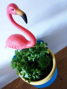 Flamingo indoor garden