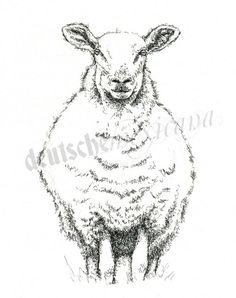 Sheep - Pen and Ink Drawing
