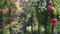 sichtschutz diese pflanzen wachsen drei meter pro jahr garten pflanzen und blumen. Black Bedroom Furniture Sets. Home Design Ideas