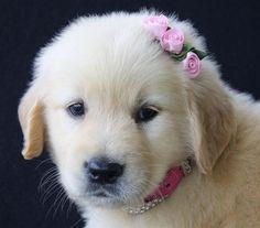 que princesa linda!