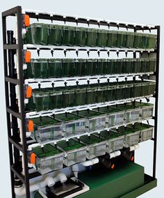 """The Aquarius Fish System™ is designed to be cost-effective and eliminate efficiency problems found in other zebrafish housing systems. Our proprietary """"Rinse & Reuse"""" mechanical filter saves time, consumable costs, and can help boost facility LEED ratings. All racks accommodate any combination of tanks"""