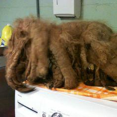 Dog Grooming Old Denton