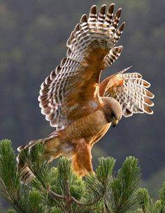 By A Natureza E Os Animais.