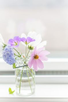 Fresh Wild Flowers and Cosmos in a windowsill. Seasons and Flowers Pastel Flowers, My Flower, Fresh Flowers, Wild Flowers, Beautiful Flowers, Cactus Flower, Exotic Flowers, Simply Beautiful, Vase Transparent