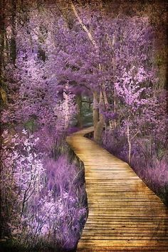 ~~Springtime in Michigan ~ abundant trail with pink & lavendar flowers at Hamlin Lake in Ludington State Park - photography by Evie Carrier~~ Beautiful World, Beautiful Places, Beautiful Pictures, Nature Pictures, Ludington State Park, All Nature, Amazing Nature, Jolie Photo, Pathways
