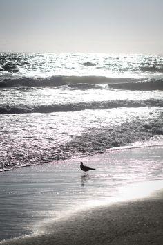 Zuma Beach, Malibu California