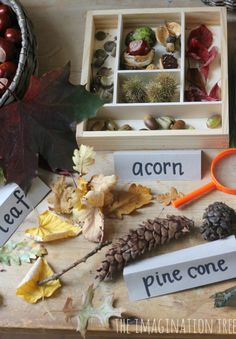 Autumn Exploration Table - nice use of adding word cards too, to boost vocabulary!
