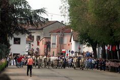 ++Feast of San Vittore - The Oxen Run ++ (Second Sunday of May - Asigliano Vercellese, Piedmont) This Oxen Run is a ritual which has continued since 1436. Tradition has it that a local outbreak of the plague had brought death and desolation to men and animals of the town. Its desperate inhabitants prayed for help to Saint Victor, promising that they would get the slowest of their animals – the ox – to run as a sign of joy and gratitude. The Saint heard their prayers and the plague ceased…