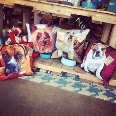 Bulldog, Boxer, Yorkie, and Schnauzer pillows!