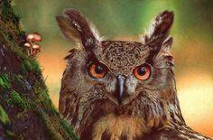 Biro pen illustration of an Owl by Samuel Silva
