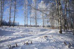Зимний пейзаж на берегу канала имени Москвы.Россия.(фото №13)