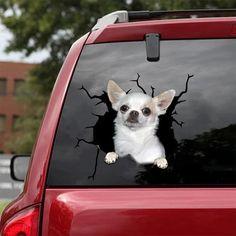 Chihuahua White Car Sticker   Colorful   Car Decal   11.8'' 15.7'' 19.6'' - Car sticker / L