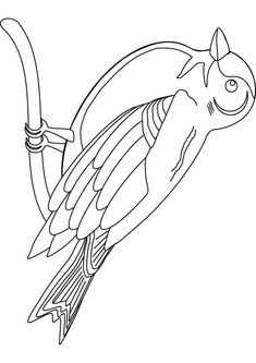 Finch Birds Coloring Picture