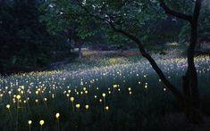 Light installation by Bruce Munro http://www.brucemunro.co.uk/