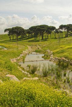Parque Forestal Valdebebas, Parque Felipe VI. vía Flickr