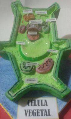 Image of: Sel Hewan Maqueta Célula Vegetal Pinterest 13 Best Em And Evie Images Crafts For Kids Kid Crafts Crafts