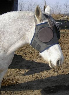 "Kim Mullen's Sport Horse, ""Amira"" wearing the ""Standard Guardian Mask with 95% Sunshades"" 2010' www.horsemask.com"