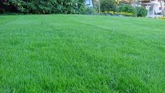 There are many varieties of grass, and the types of lawn grass determine the type of lawn care needed for a healthy yard. Learn more about the types of grass you have on your lawn can be the secret to having a healthy lawn for years to come.