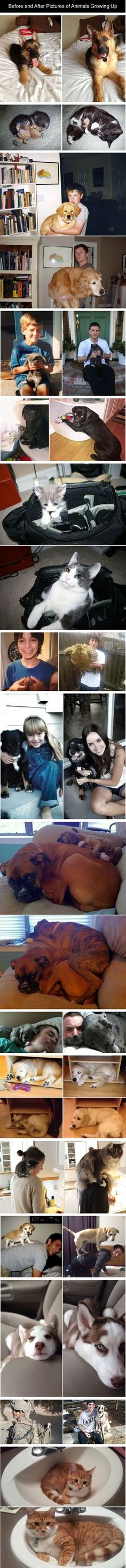 Before and After Pictures of Animals Growing Up
