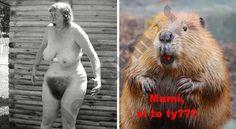 Tentokrát něco trochu lechtivějšího: Bobr jakého svět neviděl (do teď) :D Beavers, Sims, Boobs, Funny Pictures, Lol, Interesting Facts, Funny, Kunst, Fanny Pics