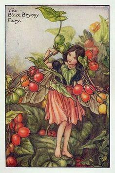"""Cicely Mary Barker, an Autumn Fairy, """"The Black Bryony Fairy"""""""