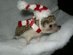 aranyos állatok - Bing Képek