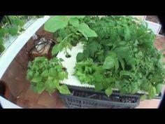 Cultivo Hidroponico casero 1.4 - YouTube