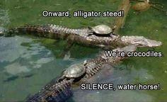 23cd5745fba854fce181256e52054d66 turtle memes google search fûńñēÿ pinterest turtle, memes