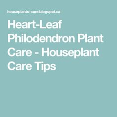 Heart-Leaf Philodendron Plant Care - Houseplant Care Tips