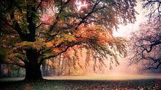 Outono Outono Folhas Florestas Paisagens Natureza